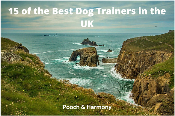 best-dog-trainers-in-the-uk.png