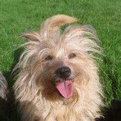 Smiling Daisy dog