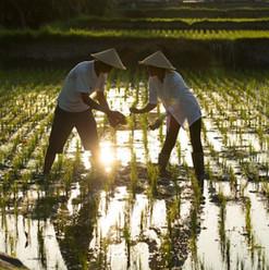 Rice_Planting_57f738877ed97-1024x683.jpg