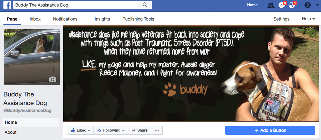 Buddy The Assistance Dog