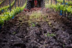 tracteur-de-dos-labour.jpg