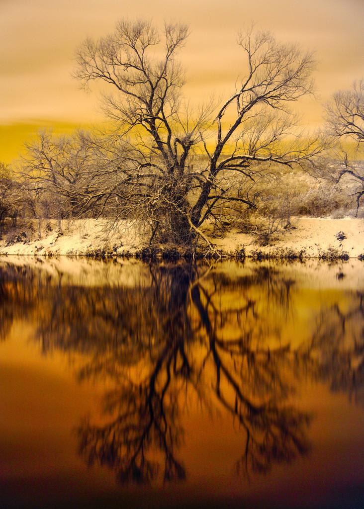 Strom na břehu Berounky u Mokropes, dvouminutová expozice, kombinace polarizačního a infračerveného (720 nm) filtru.