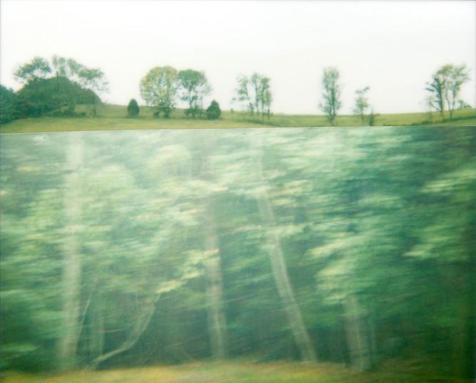 Cut Trees Field, 2010