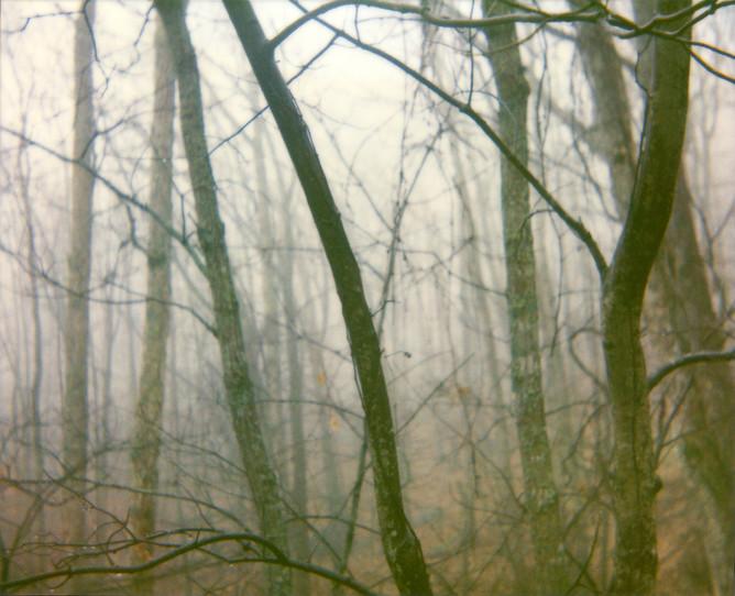 Dark Trees Forest