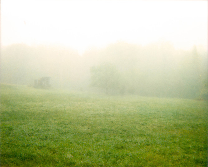 Fog Tree Shack