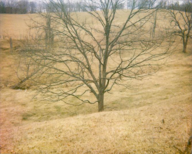 Field Tree.jpg