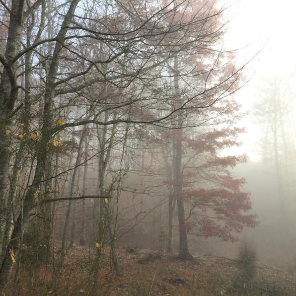 Road Fog 2, 2020