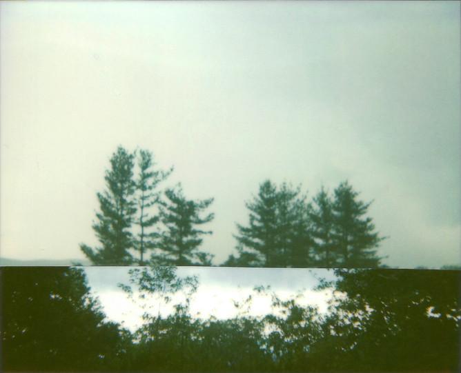 Cut Trees, 2010