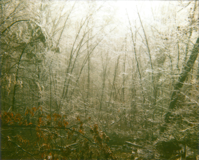 forest ice.jpg