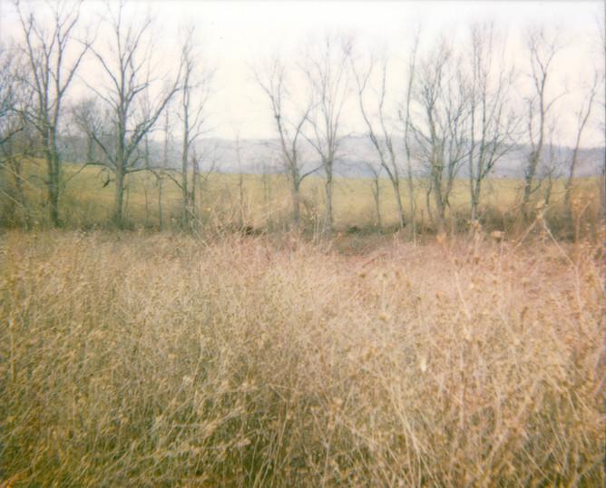 Weeds Trees Field Hills Sky
