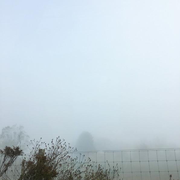Road Fog 8, 2020