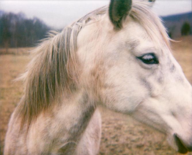 Horse, 2008