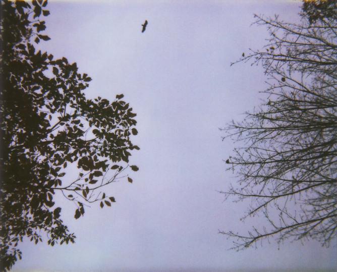 Leaves Trees Bird