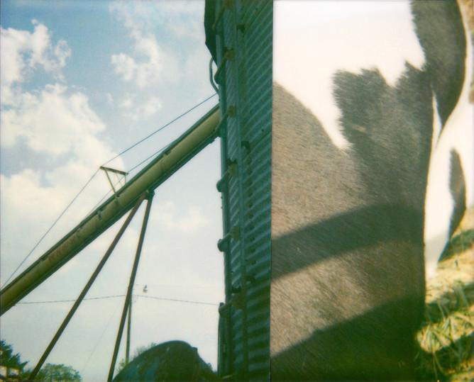Cut Cow Silo, 2010