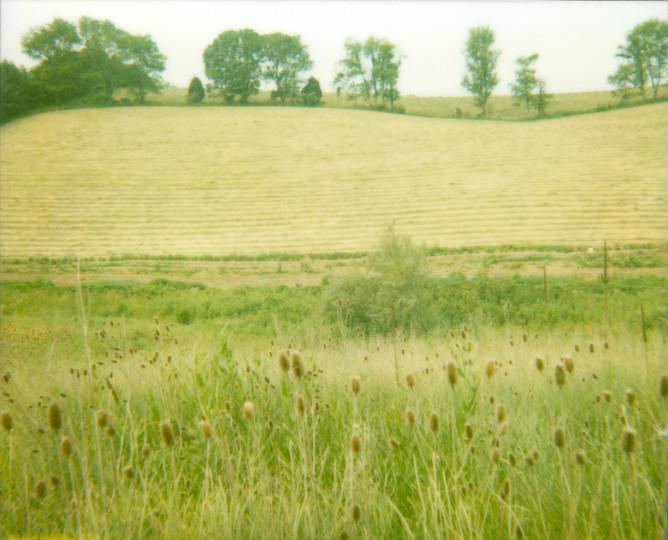 Field Rows