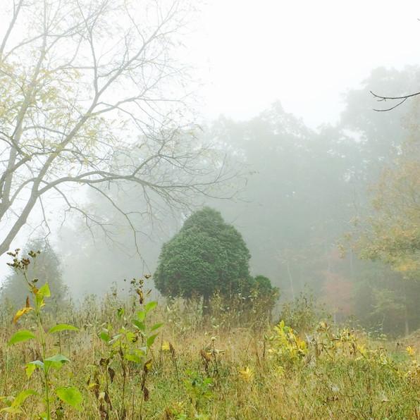 Road Fog 9, 2020