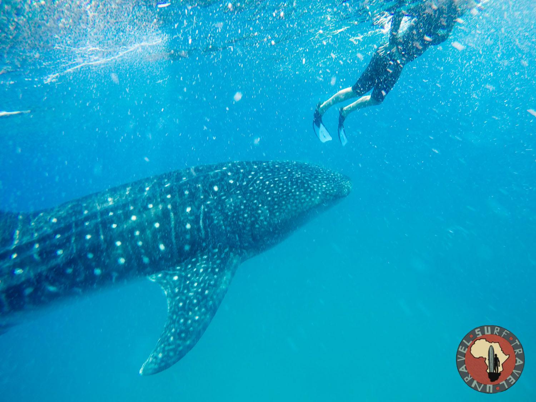 Океанское сафари Серф трип ЮАР Мозамбик Unravel Surf Travel