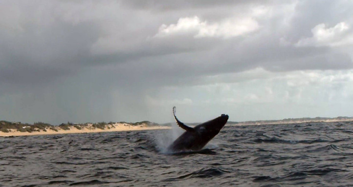 Сафари Серф трип ЮАР Мозамбик Unravel Surf Travel