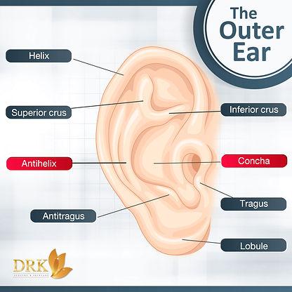 AW Info The outer ear 3-01 ReT.jpg