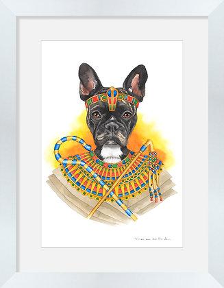 Frenchie Egipcia