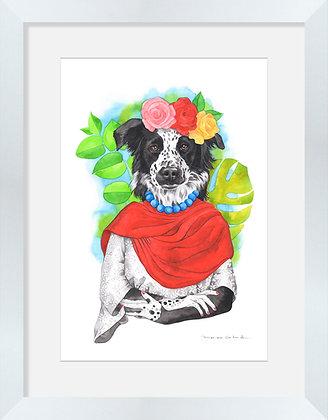 Border Collie Frida