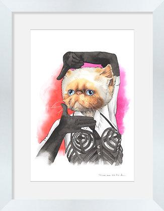 Gato Persa Madonna