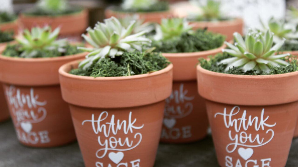 Small succulent favours