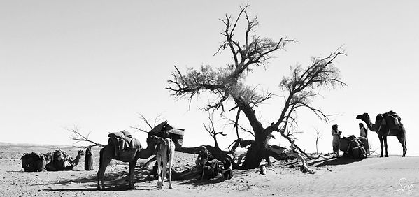 meharee desert maroc