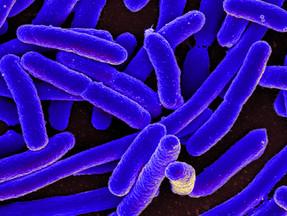 How Probiotics Improve Bone Strength