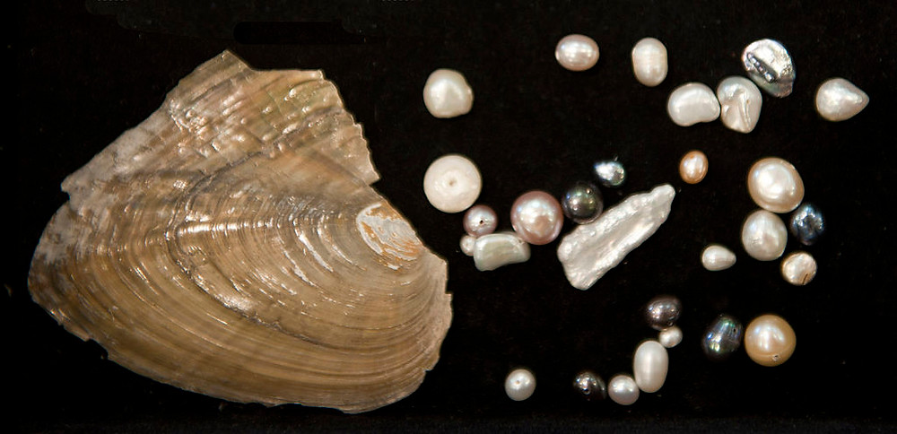 Variety of different natural pearls