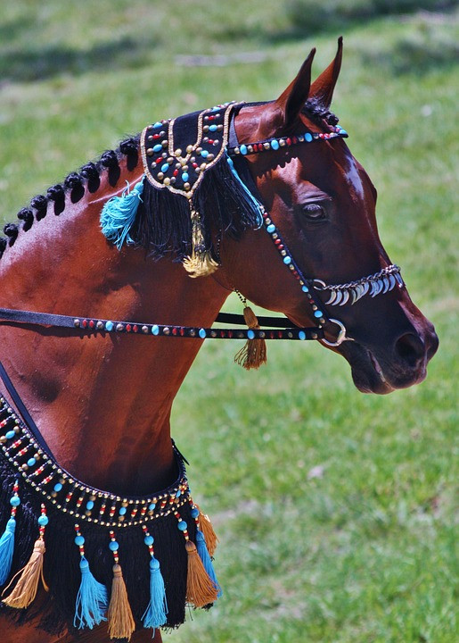 Arabian horse wearing bridal decorated with turquoise