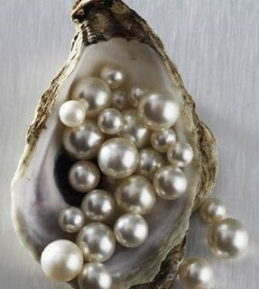 South Sea Pearls in a Shell