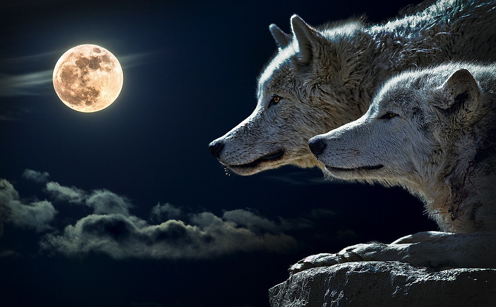 Wolves and the Full Moon