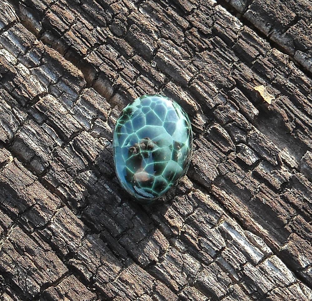 Chlorastrolite Polished Gem on Bark