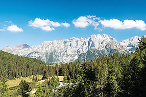 Wood_in_front_of_Brenta_dolomites_314465