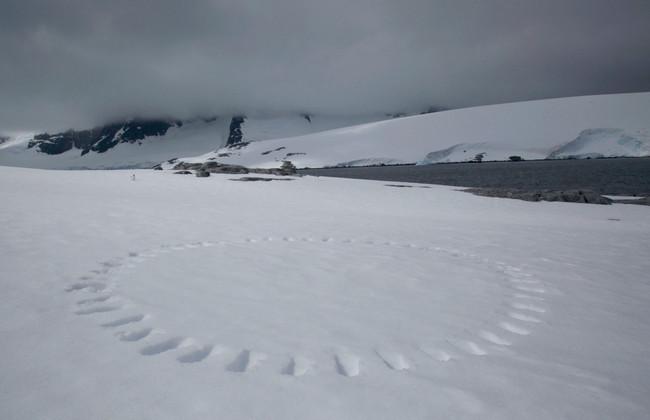 Leave only footrpints - Wiencke Island.j