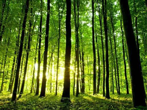 ¿Prefieres el bosque o el árbol?