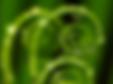 leaf spirals.png