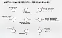 Anatomical movements.png