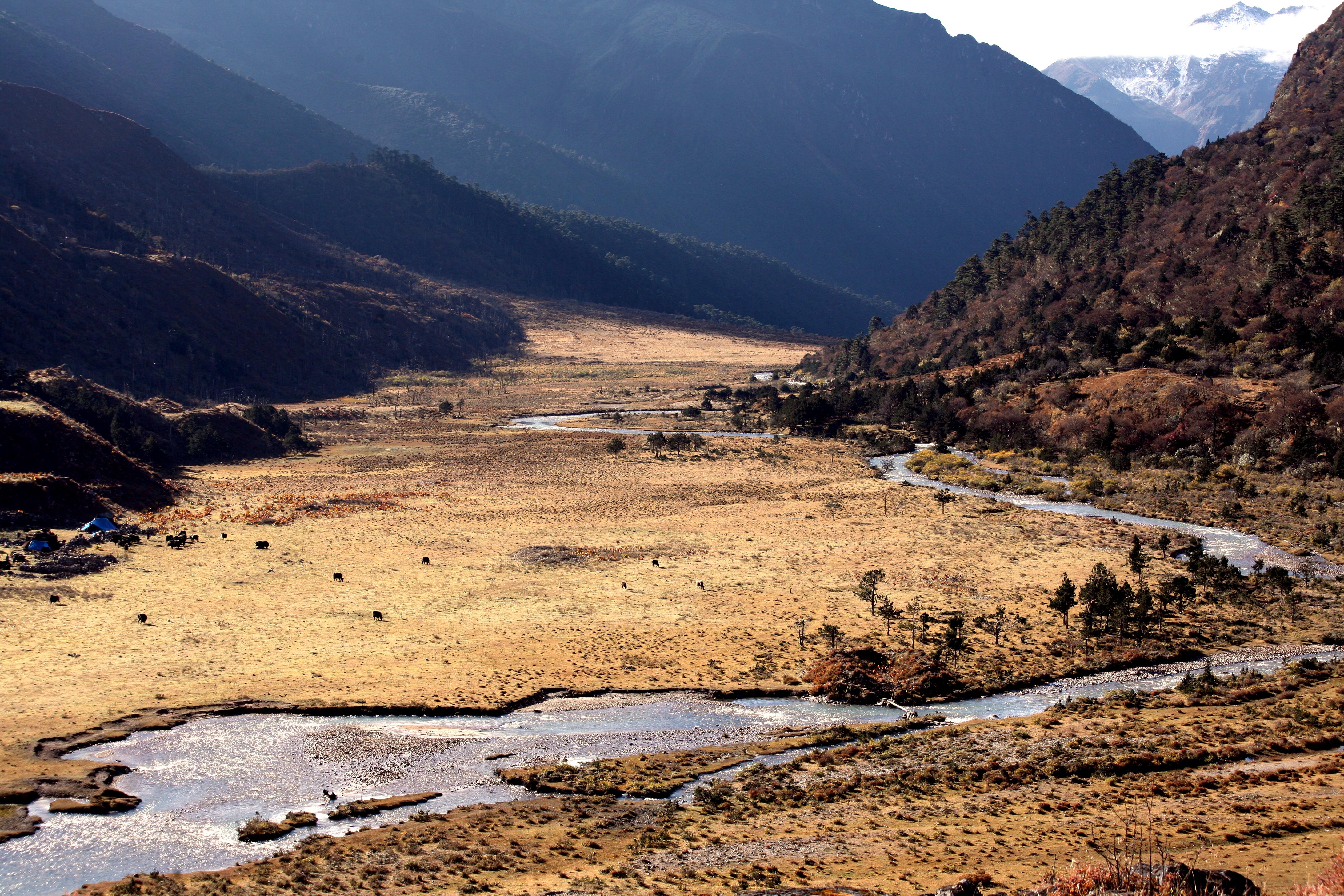 Bhutan Natural Clean Organic