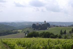 Vignes en Toscane.JPG
