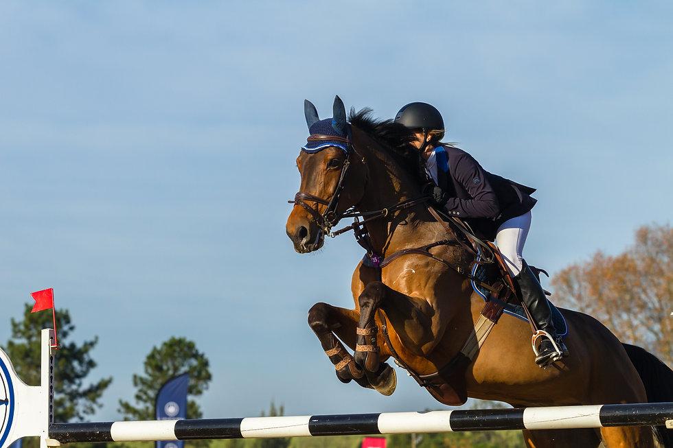 31541991-rider-horse-jumping.jpg