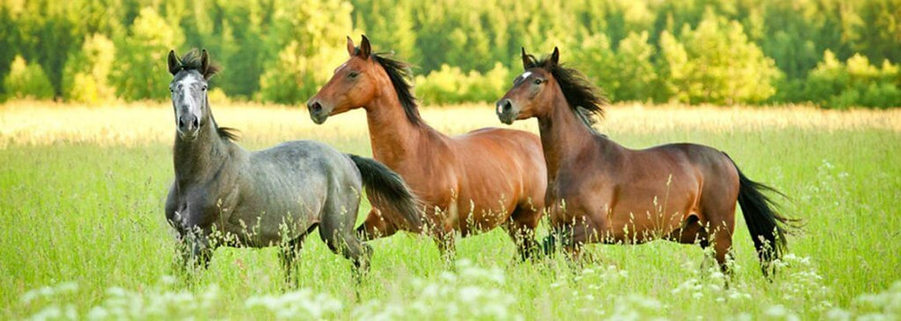 Pferdesteuer auch für Pferdehalter Dithmarschen