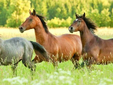Pferdesteuer - Goldeselstimmung bei den Kommunen