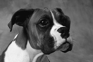 bw-dog.jpg
