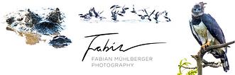 Fabian Muhlberger logo.png