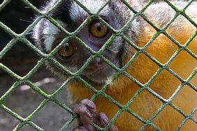 Mammals - Night monkey (Gaby Wiederkehr)