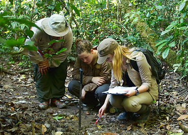 Mammal team at work (Holly ODonnell) SMA