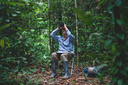 Bird watchign during a Fauna Forever avian point count survey