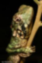 Herps - Lizard (an Markham).jpg